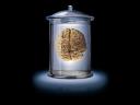 brain bell jar